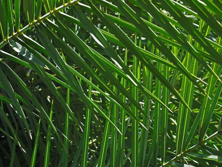 Palm Crosshatch