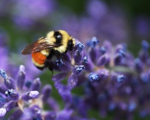 Bee Season in Salt Lake City