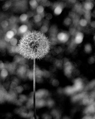 Circles of Life by Rona Black